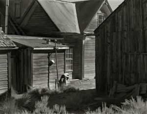 Weathered Wood and Sage, Bodie, CA -